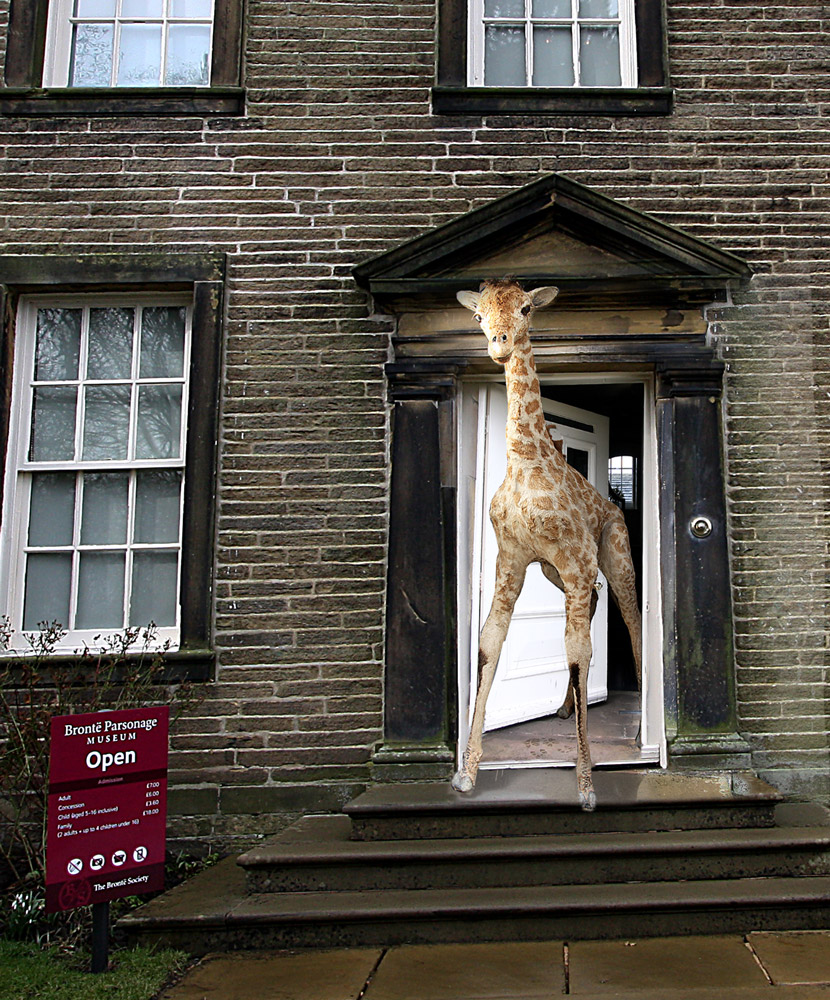 Giraffe at the Bronte Parsonage